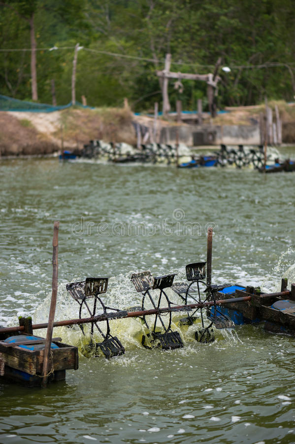 Garnalenlandbouwbedrijf, Thailand royalty-vrije stock foto