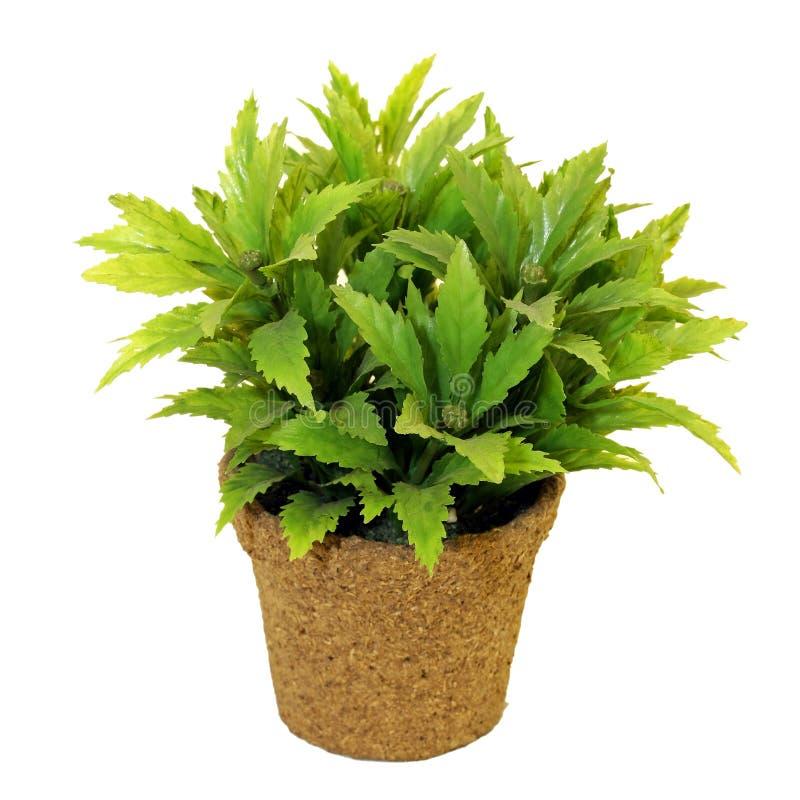 garnek roślinnych obraz stock