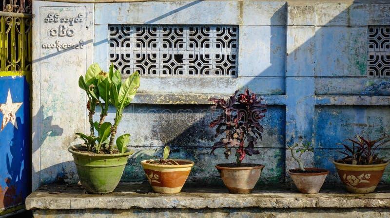 Garnek rośliny dla dekoraci przy starym domem obraz stock