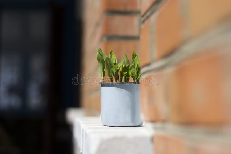 Garnek z rośliną zdjęcia royalty free