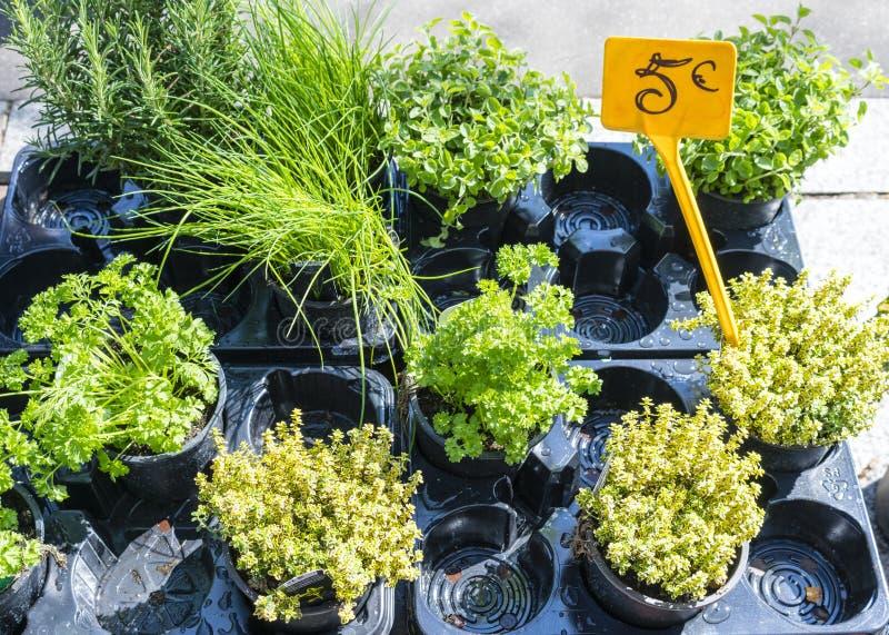 Garnek ziele w Francuskim rynku z 5 euro znakiem zdjęcia stock
