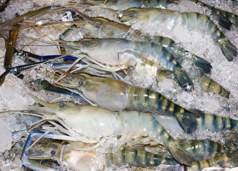 Download Garnele stockfoto. Bild von garnele, tief, kühl, frisch - 27725624
