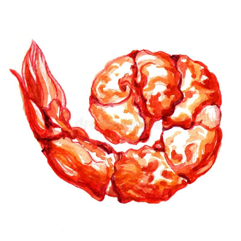 Garnele. Aquarellmalerei lizenzfreie abbildung