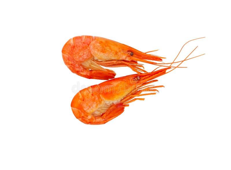 Garnele gotować się marznąć na bielu Owoce morza gotowała krewetki Krewetka obrazy royalty free