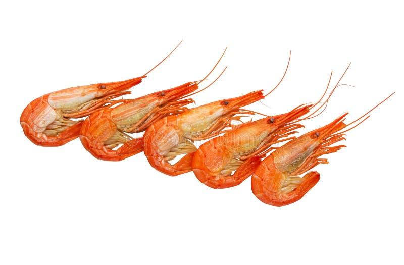 Garnele gotować się marznąć na bielu Owoce morza gotowała krewetki Krewetka obrazy stock