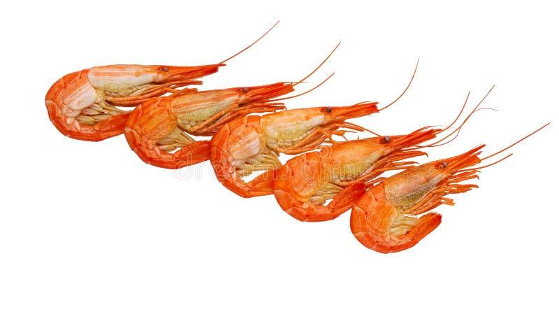 Garnele gotować się marznąć na bielu Owoce morza gotowała krewetki Krewetka zdjęcie royalty free
