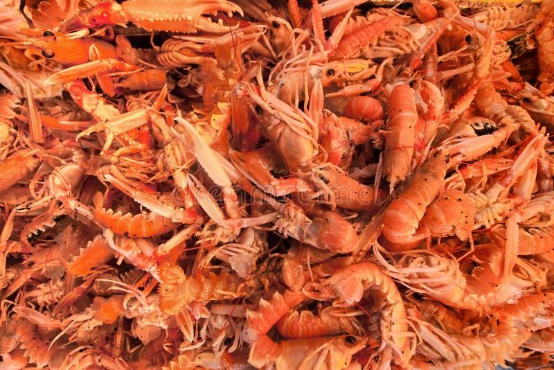 Garnelen. Der Fischmarkt stockfotos