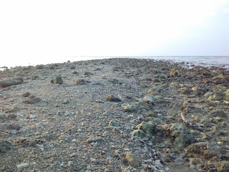 Garnelen und Strand lizenzfreie stockfotos