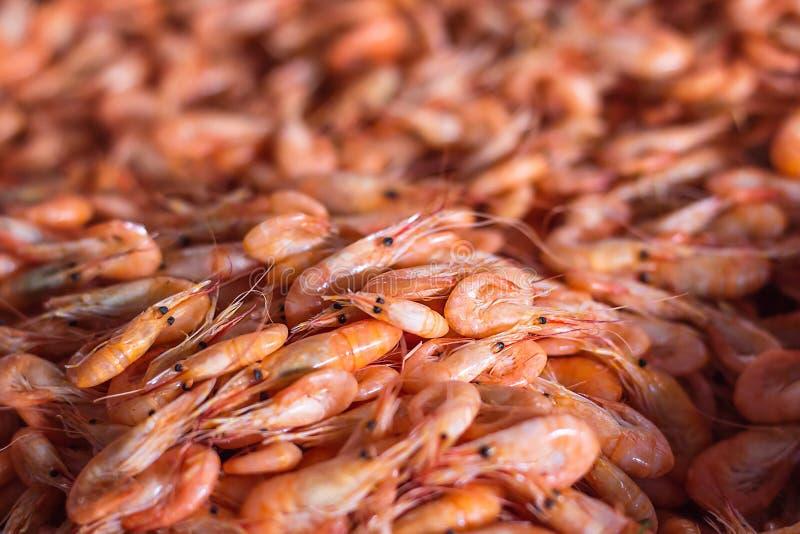 Garneli tła tekstura Mnóstwo denny wzór krill lub garnela Denny jedzenie lubi garneli lub krill na ulicznym karmowym festiwalu ST fotografia royalty free
