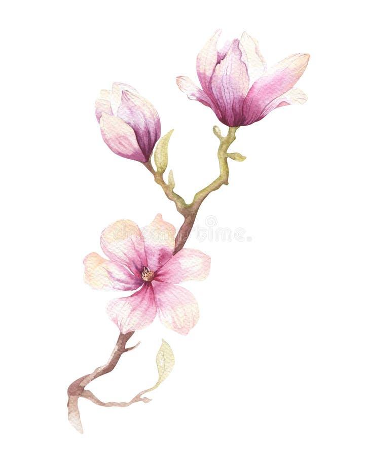 Garnering för tapet för blomma för blomning för vattenfärgmålningmagnolia arkivfoto