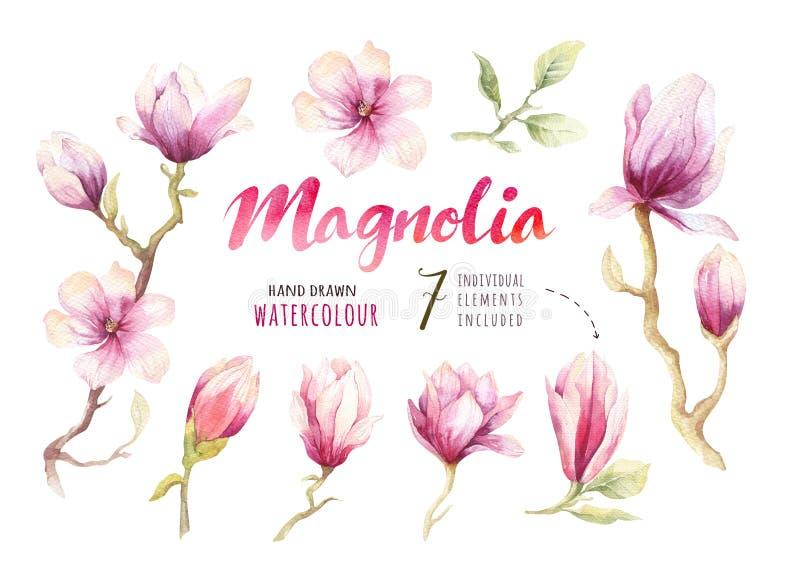 Garnering för tapet för blomma för blomning för vattenfärgmålningmagnolia stock illustrationer