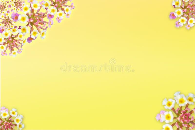 garneringblomma royaltyfri foto