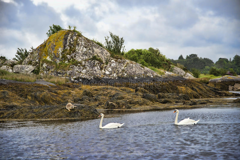 Garnish Island. Is an island in Glengarriff harbour, part of Bantry Bay in southwest Ireland, which is a popular tourist attraction stock image