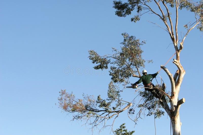 Garniture d'arbre photographie stock libre de droits