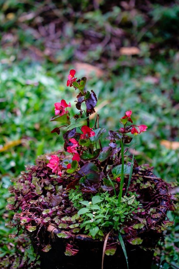 Garnki i wazy z różnorodnymi zielonymi roślinami w zakrywającym środowisku obraz stock
