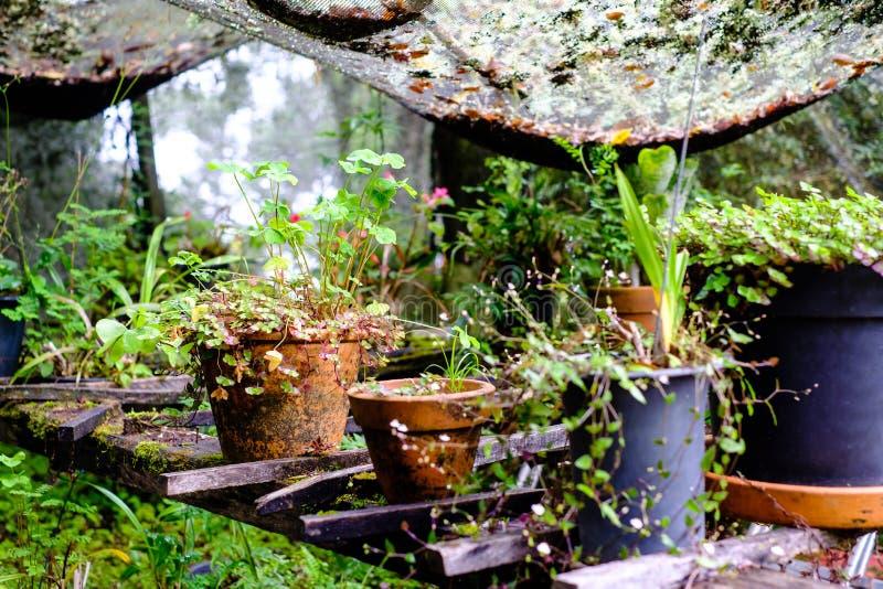 Garnki i wazy z różnorodnymi zielonymi roślinami w zakrywającym środowisku zdjęcia royalty free