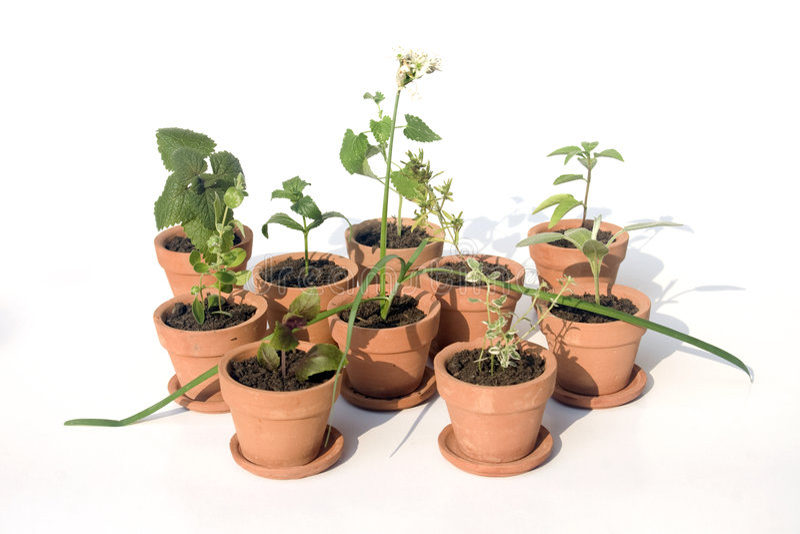 garnki różnych zioła zdjęcie stock