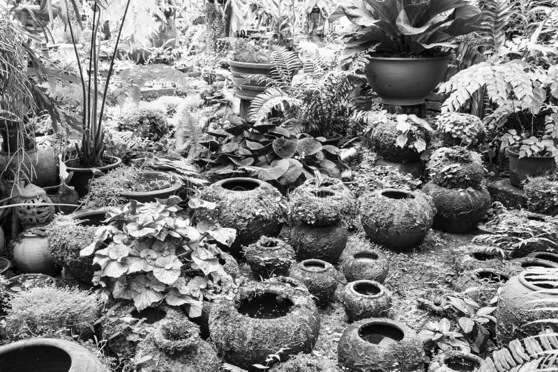 Garnki w ogródzie zdjęcia royalty free