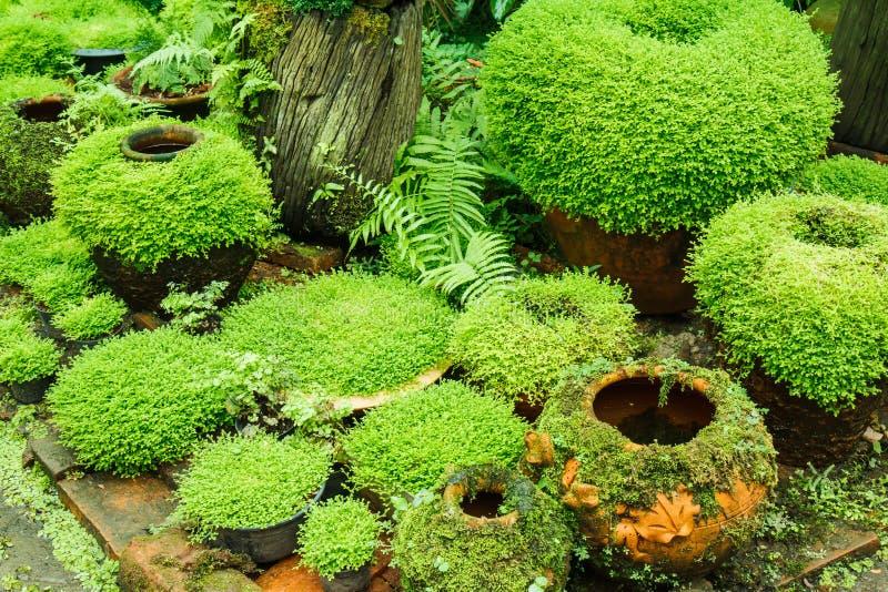 Garnki w ogródzie obraz stock