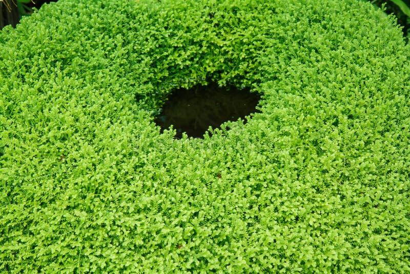 Garnki w ogródzie zdjęcia stock