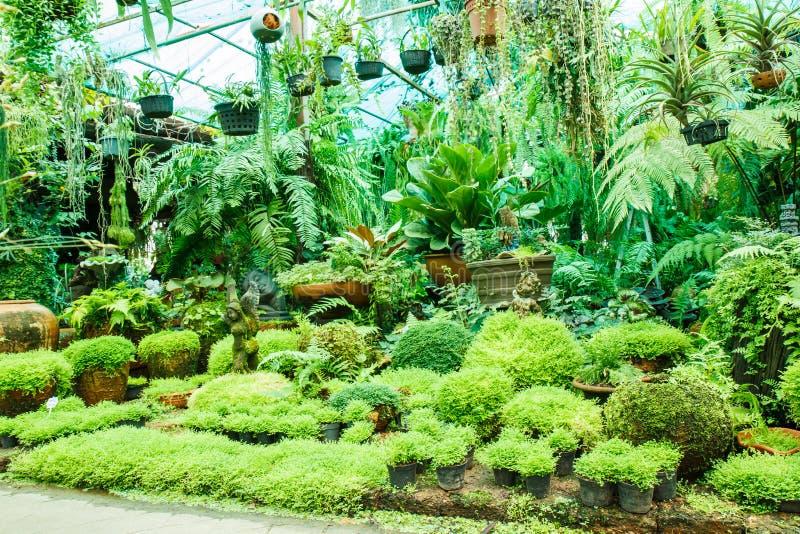 Garnki w ogródzie fotografia royalty free