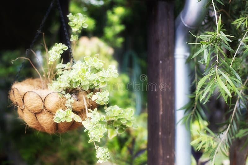 Garnki z kwiatem w ogródzie fotografia stock