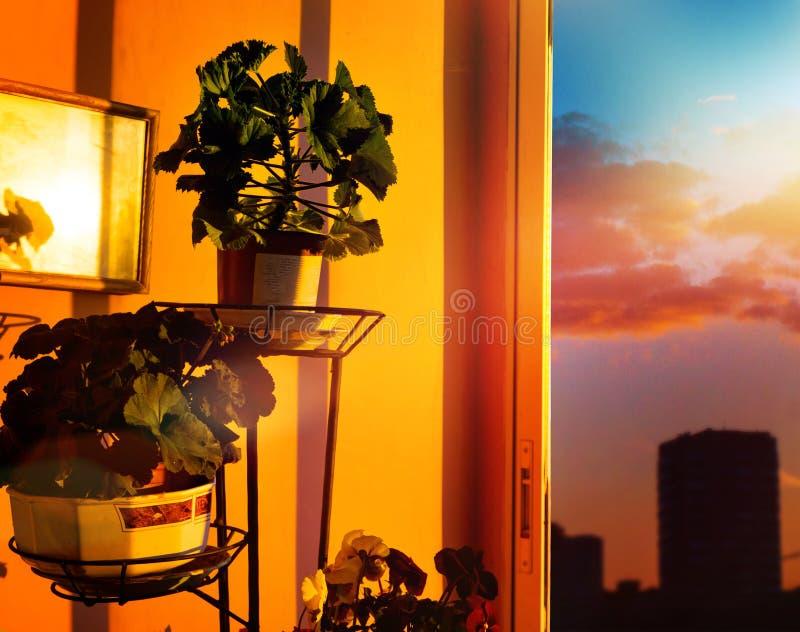 Garnki z zielonymi roślinami, kwiaty przy zmierzchem przeciw niebu na balkonie, obraz stock