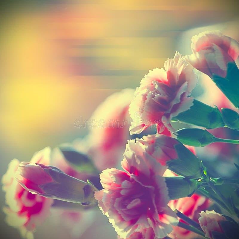 Garofani rosa fotografie stock