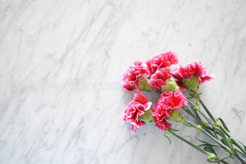 Garofani rosa su una tavola di marmo immagini stock