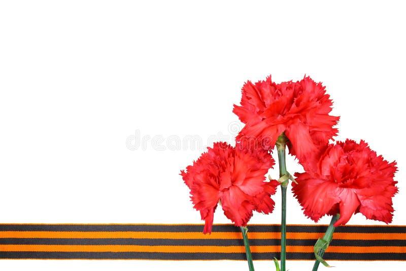 Garofani rossi con il nastro del ` s di St George isolato su fondo bianco 9 maggio giorno della vittoria nella grande guerra patr fotografia stock libera da diritti