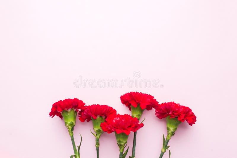 Garofani rossi su fondo rosa con lo spazio della copia Carta di festa della Mamma, San Valentino fotografie stock libere da diritti