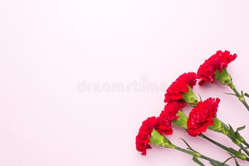 Garofani rossi su fondo rosa con lo spazio della copia Carta di festa della Mamma, San Valentino immagine stock libera da diritti