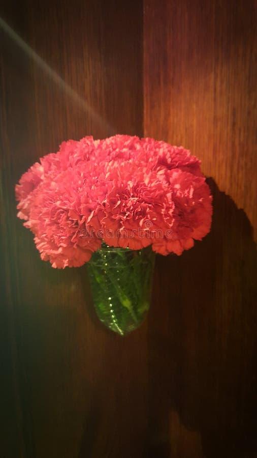 Garofani rossi in vaso fotografia stock