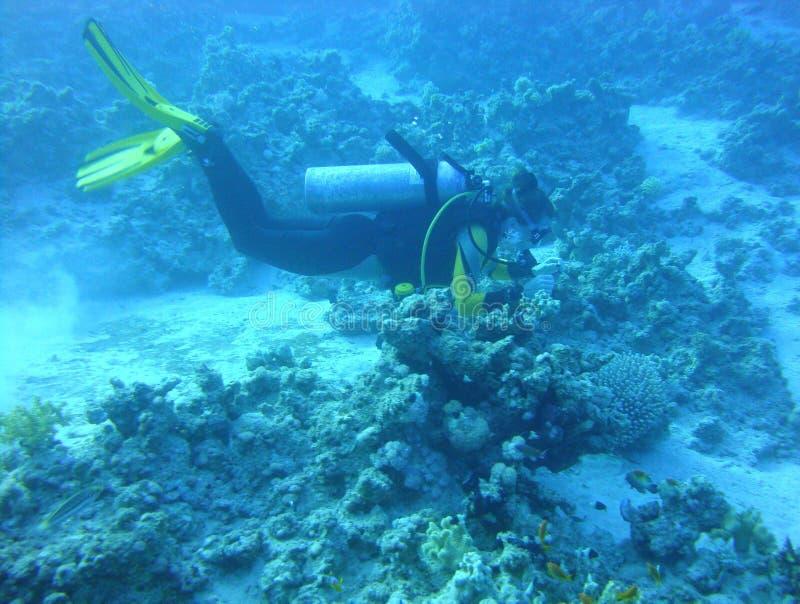 Garota mergulhadora no recife de coral no mar Vermelho Mergulho Scuba foto de stock