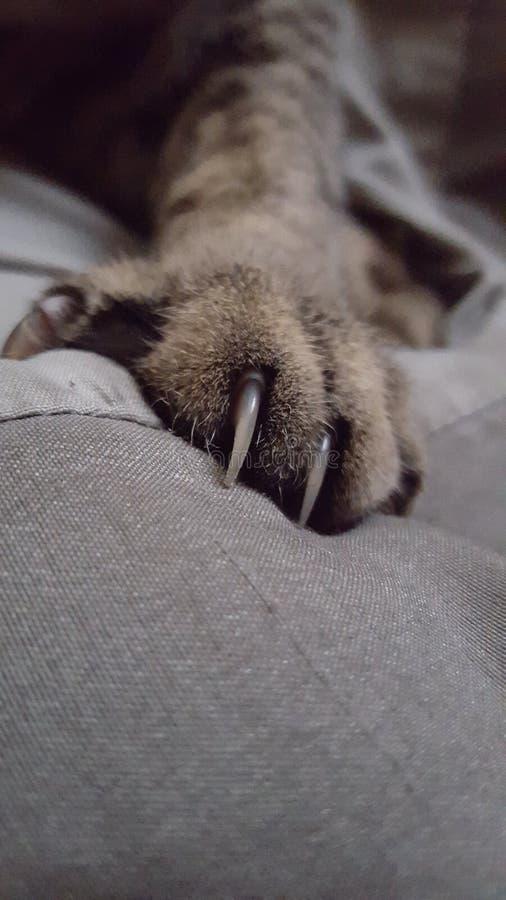 Garra del gato fotos de archivo libres de regalías