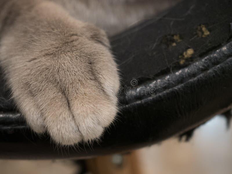 Garra del gato en viejos asientos de cuero con los gatos rasguñados imagenes de archivo