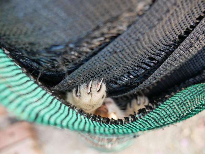 Garra del ` s de Tabby Kitten en la red fotografía de archivo
