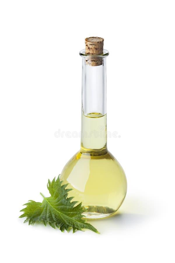 Garrafa com óleo da folha do shiso foto de stock