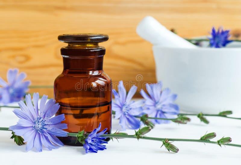 Garrafa da farmácia com tintura do extrato da chicória, infusão, óleo foto de stock royalty free
