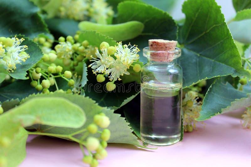 Garrafa de óleo essencial do Linden com as flores frescas do Linden em de madeira imagem de stock royalty free