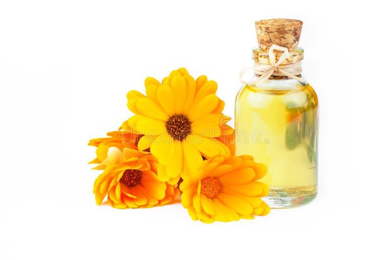 Garrafa de vidro do óleo essencial do calendula com as flores frescas do cravo-de-defunto isoladas no fundo branco fotos de stock royalty free