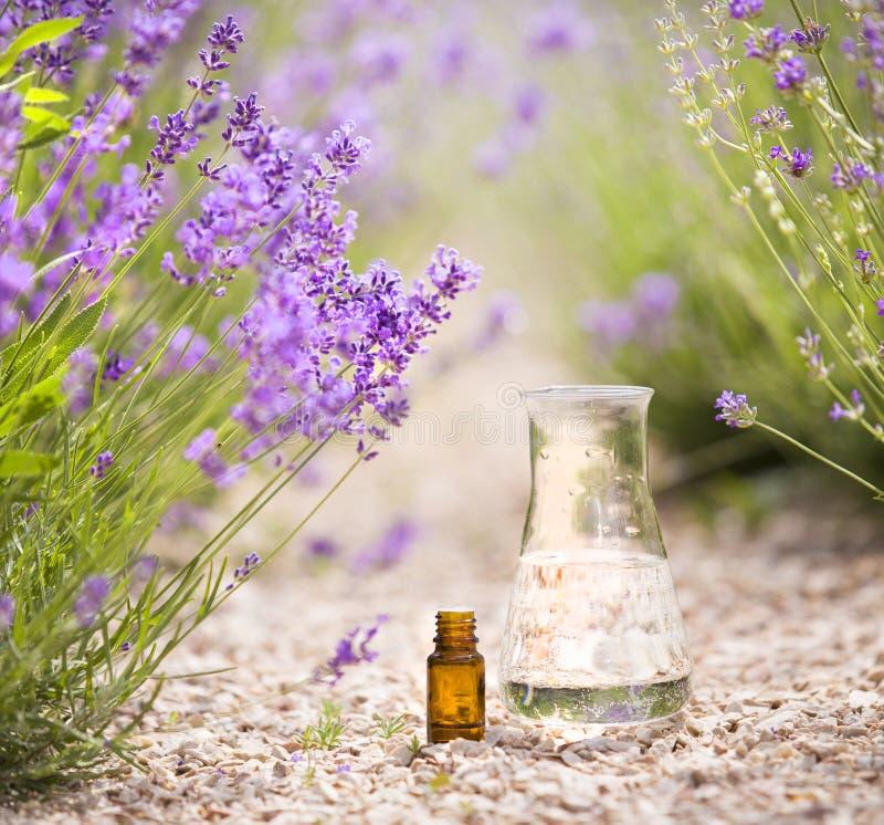 A garrafa do óleo aromático essencial cercou por flores frescas fotografia de stock