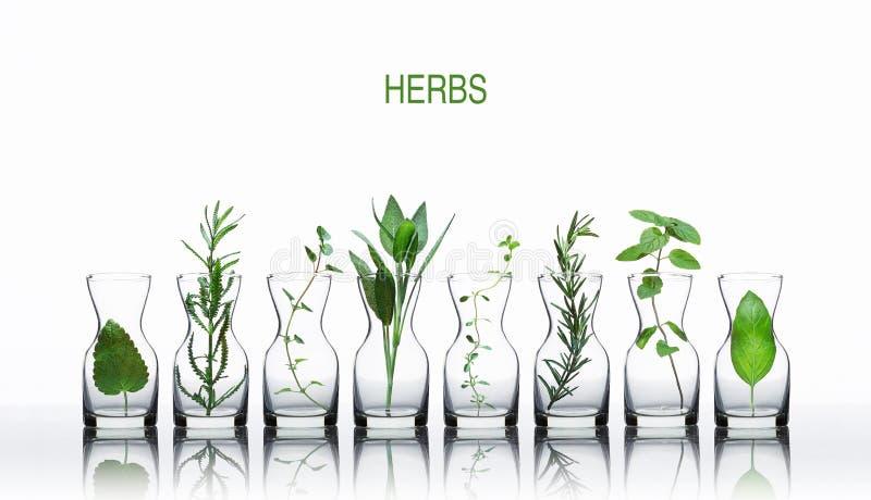 Garrafa do óleo essencial com erva-cidreira das ervas, alfazema, orégano fotos de stock