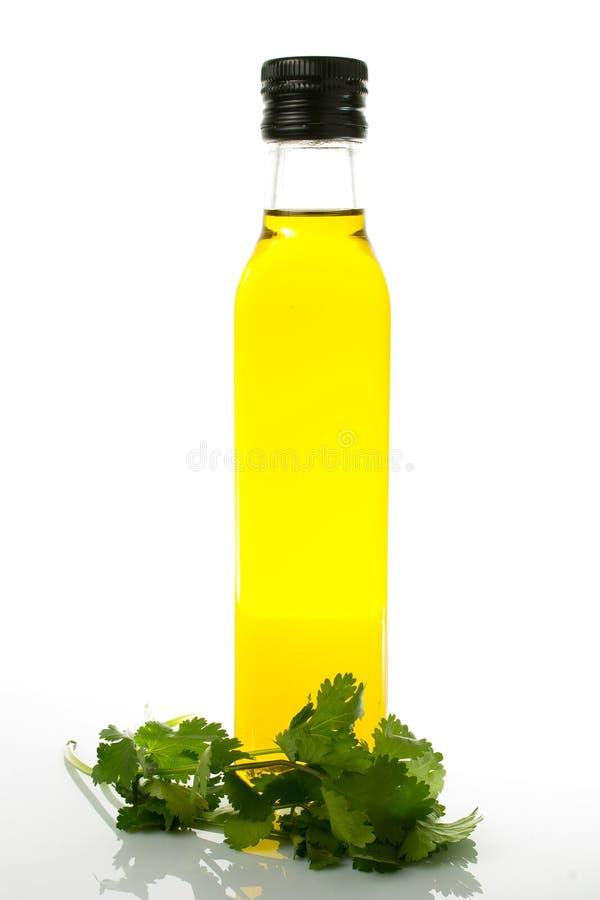 Garrafa do azeite com cilantro no fundo branco imagem de stock