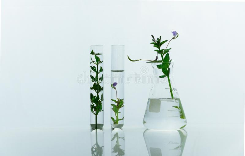 Garrafa e tubos de ensaio de vidro com a flor selvagem roxa verde para a saúde médica ou o laboratório de pesquisa cosmético da c fotografia de stock