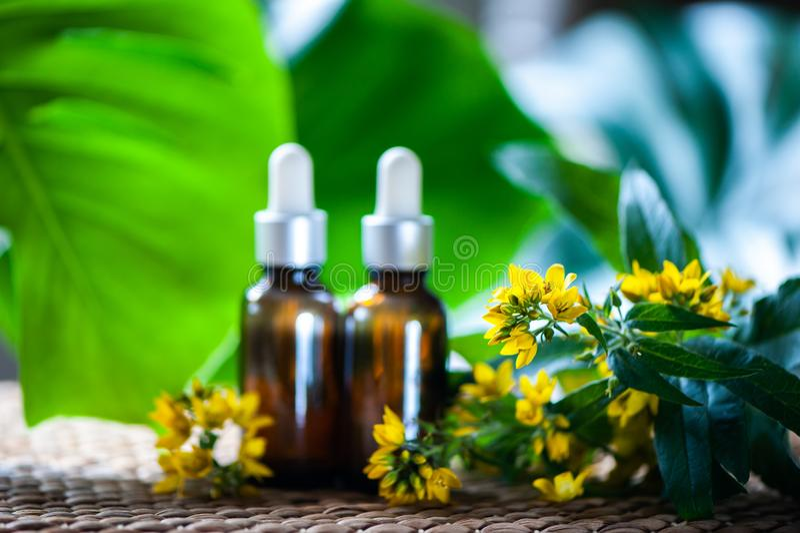Garrafas com extrato do wort do ` s de St John e Hypericum das flores, orga imagem de stock royalty free