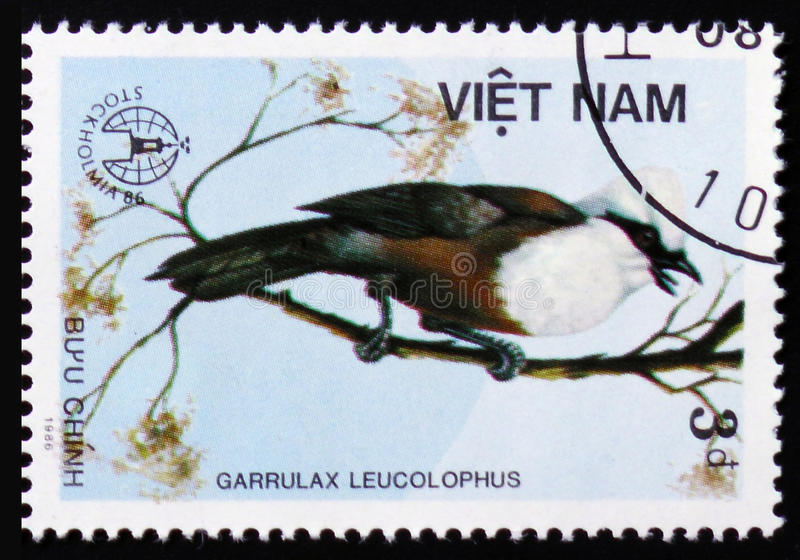 MOSCOW, RUSSIA - FEBRUARY 12, 2017: A stamp printed in Vietnam shows Garrulax leucolophus or white-crested laughingthrush, series stock photography