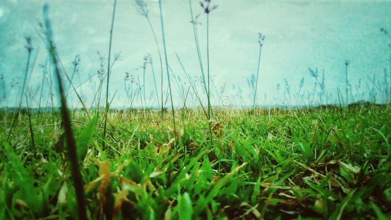Garss verts dans classés photos stock