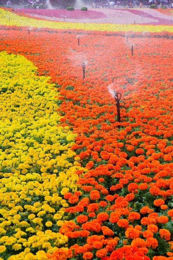 Download Garten stockbild. Bild von gras, tageslicht, gardening - 27734435