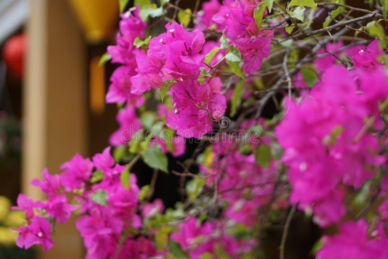 Download Garten stockfoto. Bild von inside, blume, pagode, garten - 96929282